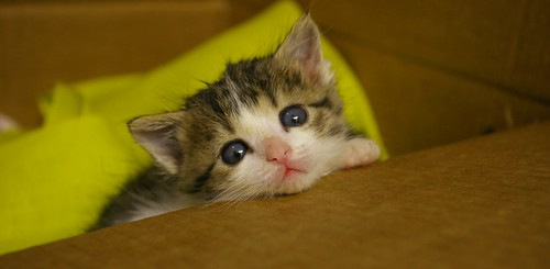cute rescued kitten sos animal shelter