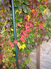 Signs of Autumn 2009