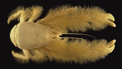 06_yeti-crab-weird-creature