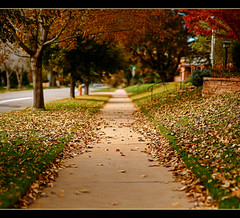Fall Fades Fast (Chad Galloway Photo) Tags: street camera autumn trees fall grass leaves colorado dof bokeh fallcolors sony denver depthoffield sidewalk co shallow fullframe dslr fallenleaves brenizer ryanbrenizer a850 bokehrama brenizermethod thebrenizermethod