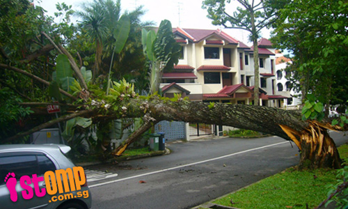 Thankfully nobody was hurt when this tree fell at Gambir Walk