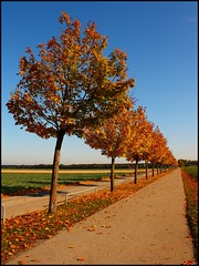 I would like to think our paths are straight (sara-maria) Tags: autumn trees red orange rot fall field leaves landscape leaf path herbst perspective feld landschaft bltter bume baum perspektive weg pfad kirchheim heimstetten