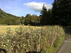 Road to Menzies Castle in Aberfeldy (friskierisky) Tags: trees sun grass scotland scenery aberfeldy lovelyday clods amazingnature menziescastle diamondclassphotographer flickrdiamond