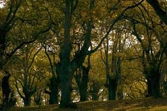 OTOO 2 (xentebrava) Tags: fall jardin botanico otoo gijon xixon roble carbayu carballeda jardinbotanicoatlantico xentebrava