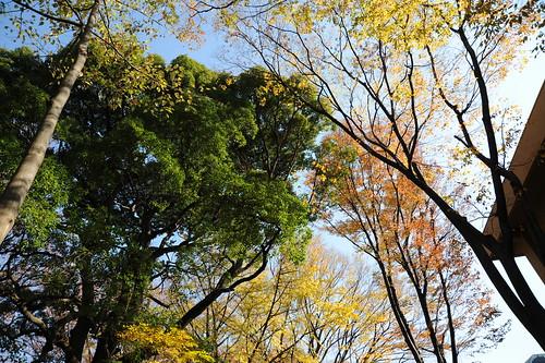 秋の東大駒場キャンパス