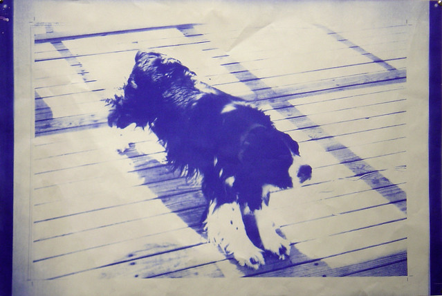 Large Blurry Puppydog Blueprint