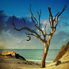 The Pakari Tree (melepix) Tags: ocean blue moon seascape tree clock colors square landscape sold surreal dali thesecretlifeoftrees vosplusbellesphotos pakraitree