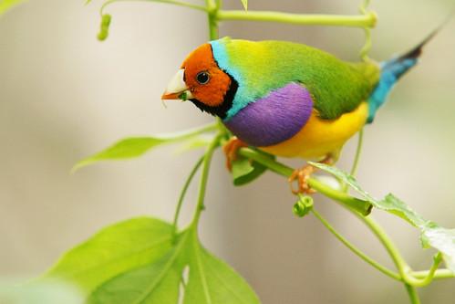 """Résultat de recherche d'images pour """"oiseau multicolore"""""""
