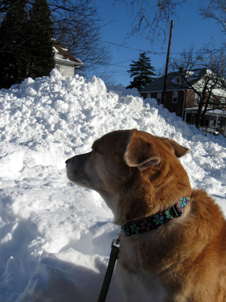 Una and the Snow Bank (Click to enlarge)