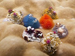 Merry Christmas Tree Worm