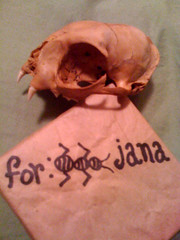 BONELUST - Cat Skull Gift from Niece with Box (She Calls Me Ant Instead of Aunt & I Love It)