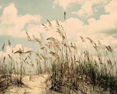 (Tina Lee Studio) Tags: blue sea summer vacation beach clouds sand seagrass florabella florabellatexturesandactions