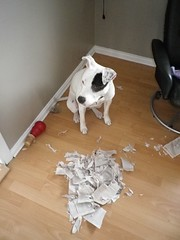 Bored dog = Shredded book