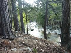 Sentier du Tavignanu RG en amont de Sega : le fleuve sous sa forêt
