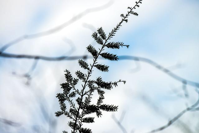 Trevlac Bluffs Nature Preserve - February 18, 2017