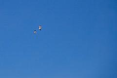 Geese fly by. (david takes photos) Tags: losflamencosnationalreserve reservanacionallosflamencos salardetara tara atacama cathedrals cathedralsofsalt chile sanpedrodeatacama regióndeantofagasta x andeangoose goose
