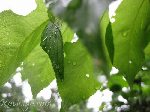 Фото листья