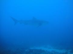ハワイ島ダイビング