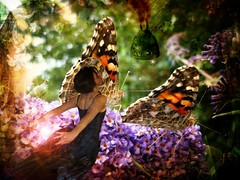 on the wings of transformation (Eddi van W.) Tags: butterfly transformation thankssnipgroup