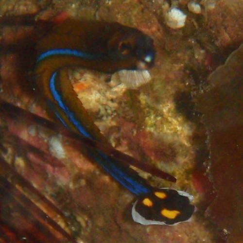 Pipefish #2