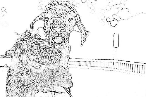 coloringbook-alpaca