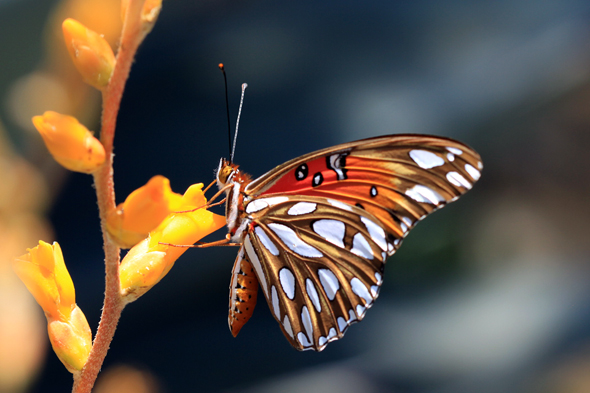 071809_butterfly01