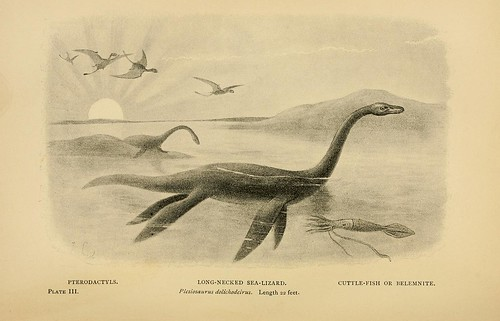 Long-necked Sea-Lizard