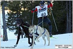 40 Rchard Barta; CZE - Skijöring - Pirena 2008