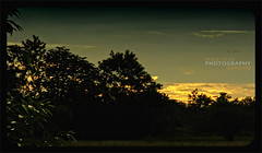 The beautiful Sunset of the Planes (::   VISUAL ARTIST ::) Tags: sunset tree green silhouette clouds contraluz atardecer golden colombia arboles nubes silueta lowsun lateafternoon losllanos crosslight arauca theplanes mauriciovalenzuela mauriciovalenzuelacanons5is