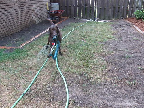 Holly, The Automatic Sprinkler System