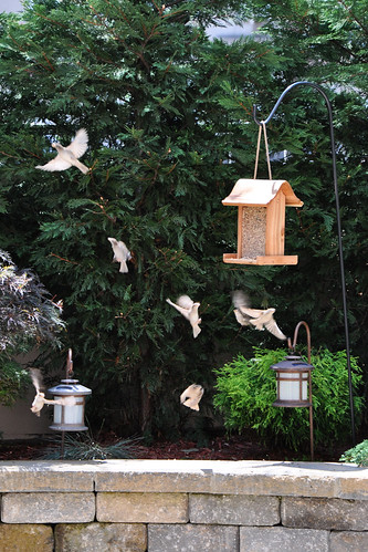 BirdsReallyFoundit
