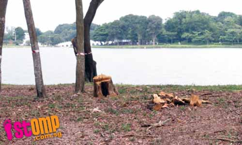 Trees at Jurong Park connector healthy, so why chop them down?