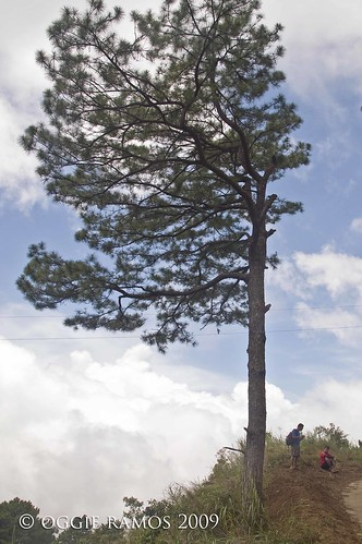 Nueva Vizcaya Salacsac Trail Pine Tree