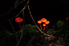 shrooms in the dark
