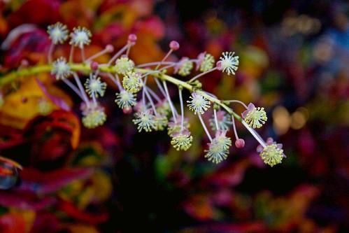 FlowerPlantColors