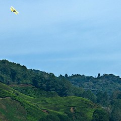 Over the hills yonder (QooL / بنت شمس الدين) Tags: green landscape tea hills malaysia plantation pahang biplane qool sgpalas qoolens camerohhighlands