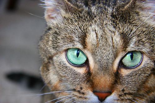 Lulu's Eyes