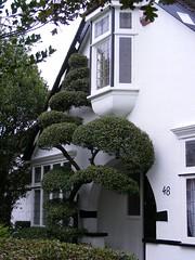 Seven Kings garden with oriel window. (sludgegulper) Tags: window topiary kings seven ilford redbridge oriel