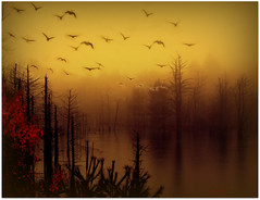 :::::::::::::::::::October flight::::::::::::::::::: (xandram) Tags: trees mist water birds fog photoshop swamp theunforgettablepictures saariysqualitypictures yourwonderland magicunicornverybest magicunicornmasterpiece