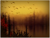 :::::::::::::::::::October flight::::::::::::::::::: (xandram) Tags: trees mist water birds fog photoshop swamp theunforgettablepictures saariysqualitypictures yourwonderland magicunicornverybest magicunicornmasterpiece