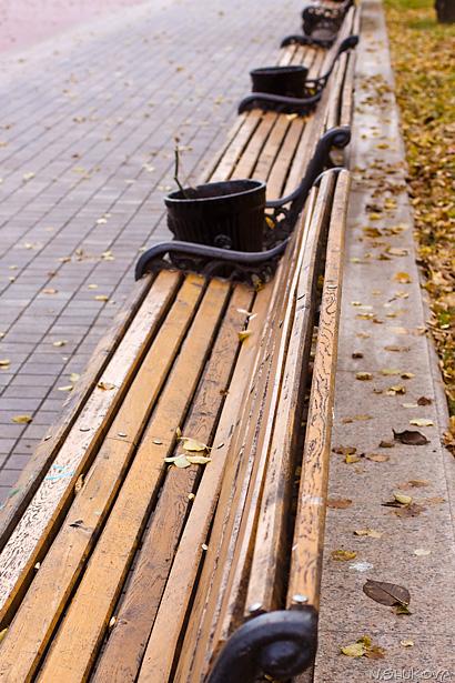 Autumn_19