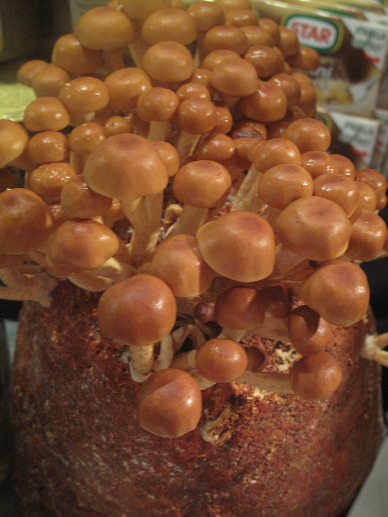 Mushrooms on aspecial growing runk