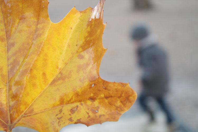 fallpallette6