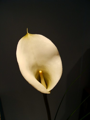 bb_flower2
