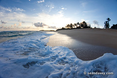 Foam Sunrise (Sean Davey Photography) Tags: ocean usa color beach water horizontal glitter contrast gold hawaii golden sand shiny warm glare bright oahu shoreline noone wave shore northshore dreamy shimmer goldenlight greenpower oceanswell northshoreoahu seandavey foamwaves oceanpower seaswell foamywaves wavesenergy clearwaves seawaveenergy oceanwavepower oceanenergy oceanwaveenergy oceanenergyresources pictureswave diamondsatsea seandaveyphotography seandaveyfineart