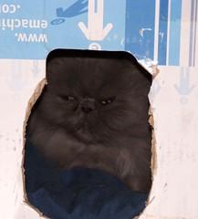 cat in cardboard box bed