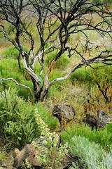 Lava Beds National Monument, landscape (Damon Tighe) Tags: california monument lava beds national damon tighe damontighe
