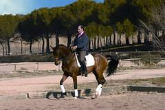 Trote (JUANLUBIS) Tags: horses horse sport canon caballo cheval caballos competition cavallo cavalo equestrian equine equus chevaux dressage equitation horserider galope domaclsica dressur equineart domaclasica horsesanddreams