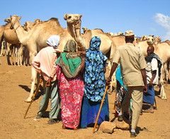 Somali Camel Market , Babile , Ethiopia (Give-on) Tags: africa ethiopia camelmarket babile colorphotoaward mygearandme