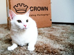 (Grendel Galore) Tags: white beautiful cat feline kitty meow crown